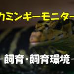 【カミンギーモニターの飼育】美しいおすすめのオオトカゲ.その飼い方と分類.