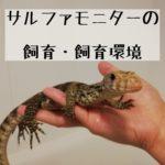 【サルファモニターの飼育・飼育環境】