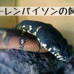 【ベーレンパイソン(ベーレンニシキヘビ)の飼育】最高峰のニシキヘビについて飼い方とその生態を徹底解説