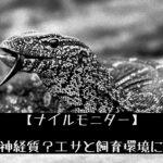 【ナイルモニター】水棲傾向の強い大型モニターの飼い方について