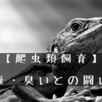 【爬虫類飼育】糞・臭いの原因と対策
