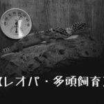 【レオパ(レオパードゲッコー・ヒョウモントカゲモドキ)・多頭飼い(同居)】多頭飼育は可能?その対策と方法.