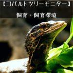 【コバルトツリーモニター】ツリーモニターの飼育・飼育環境