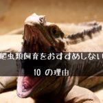 【爬虫類の飼育をおすすめしない10の理由(デメリット)】~初心者必読!~