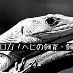 【ガストロカナヘビの飼育・飼育環境】