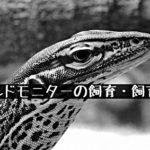【グールドモニターの飼育・飼育環境】