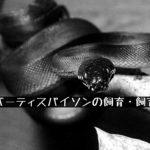 【アルバーティスパイソンの飼育・飼育環境】