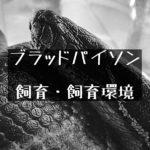 【ブラッドパイソン】太さは特定動物クラスの大型ニシキヘビの飼い方と飼育環境について
