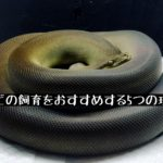 【ヘビの飼育をおすすめする5つの理由】