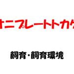 【オニプレートトカゲ】~ゲージ・えさ・紫外線~飼いやすく丈夫なトカゲの飼育について