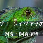 グリーンイグアナのわかりやすい飼い方~石垣島に帰化?爬虫類入門種?~