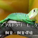 【エメラルドツリーモニター】飼育の実際とポイントは高さと多湿な環境.