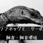 【ラフネックモニター】プテラノドンのようなトカゲの生態と飼い方