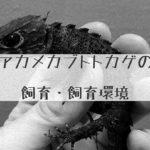 【アカメカブトトカゲ】正しい飼い方(飼育方法)とそのポイント~飼育環境・餌・繁殖~について