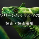 緑の美しいトカゲ【グリーンバシリスクの飼育について】