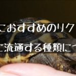 【ペットにおすすめのリクガメと日本に流通する種類について】