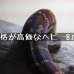 【価格が高価なヘビ-8選-】~高級パイソン・ボア・ナミヘビをまとめました~
