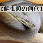 【爬虫類飼育に必要な餌代について】~モニター,パイソン,ナミヘビ,レオパなどについて~