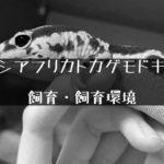 大人気のヤモリ【ニシアフリカトカゲモドキの飼い方と飼育環境】