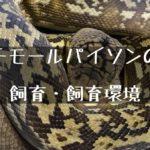 【チモールパイソン】希少なヘビの飼い方とその生態について
