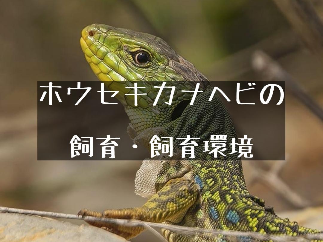 カナヘビ 飼い 方