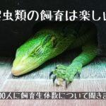 【爬虫類の飼育は楽しい】約2000人に飼育生体数について聞きました