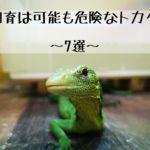 【飼育は可能だが危険なトカゲ~7選~】