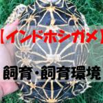 【インドホシガメ】絶滅危惧種に指定⁈高価で美しいリクガメの飼い方とは?