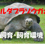 【アルダブラゾウガメの飼育?飼い方?】~大型のゾウガメを飼育するには~