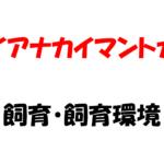 【ガイアナカイマントカゲ】半水棲トカゲの飼育方法とそのポイント
