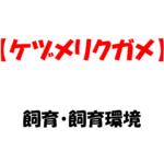 【ケヅメリクガメの飼育】~大きくなるリクガメNo.3,その飼い方と環境~