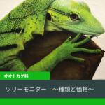 【ツリーモニター6種類の飼育方法と価格について解説】