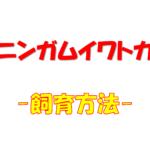 """【丈夫で飼いやすい""""カニンガムイワトカゲ""""の生態と飼育について】"""